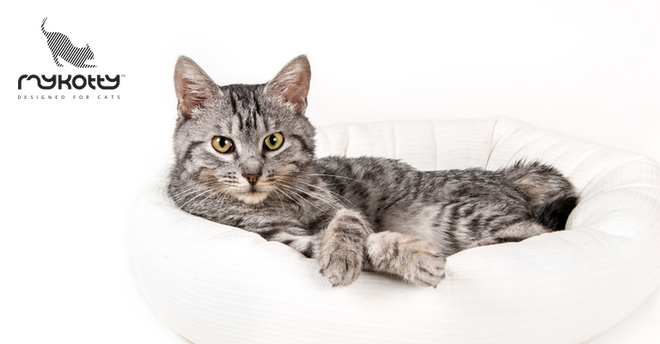 30% na akcesoria dla kotów